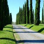 Alameda de entrada do La Sovana