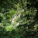 Cascada del chorro del Macho tras la vegetacion