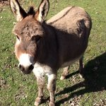 Ataya, one of our friendly donkeys
