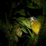 Cloud Forest Day & Night Tours