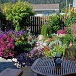 Einmalige Blumenpracht im Garten