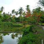 kanal and gardens behind the bungalows