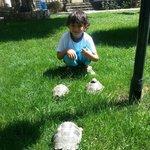 die Nova Schildkröten