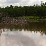 Eco Pond Foto