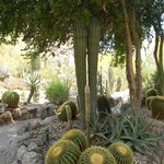 All types of cactus in the garden