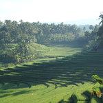 Rice Terraces at Warung Tepi sawah