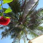 Вид с лежака под пальмой