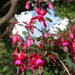fioritura di maggio