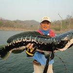 Giant snakehead fishing