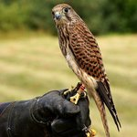 Falconry also available please phone 0121 308 1951 for halk walks etc etc