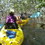 This was inside the mangrove tunnels