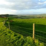 A walk to Niton produced this view