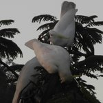 Cockatoos - beautiful, but God awful noisy!