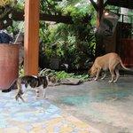Pups and kitties