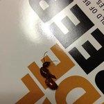 Ameise welche im Bett war
