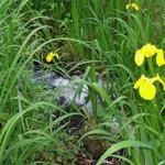 敷地内に四季折々の花が咲き鶯の鳴き声川蝉も見られる周辺の森です