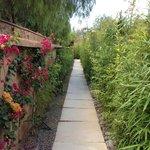 Le petit chemin qui rejoint les pavillons