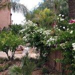 Les jardins du Tigmiza