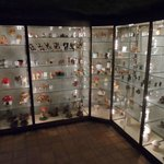 Vitrine met diverse champignons