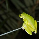 Earlier on the first night when we came back from dinner we met this tree frog just hanging out.