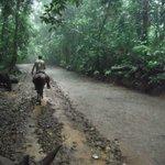 Horseback riding tour through the rainforest. Our guide Che ahead