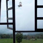 hummingbird window room 3