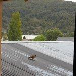Un visitante en mi ventana
