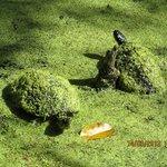 Tortugas tomando el sol