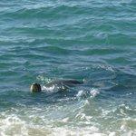 Sea turtle outside the condo