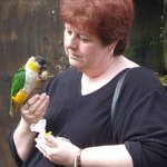 Very friendly Caique who wanted to come home with me!