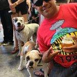 Angel & 2 Doggies