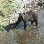 Bear tour!