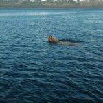 Seal lion!