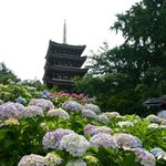 Hondo-ji Temple