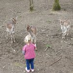 Feeding the deers at Tamar Otter & Wildlife Centre