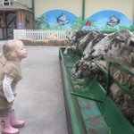 At The Big Sheep