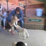 Feeding the lambs at The Big Sheep