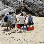 Sea turtle team