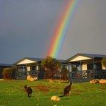 kangaroo rainbow