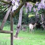 Deer feeding nearby