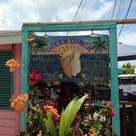Queen Conch Photo
