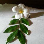 Beautiful flower on the pillow