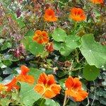 bloemenpracht op Madeira