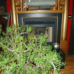 Fireplace and amazing Jade plant...