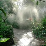 Mist walk
