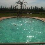 nico pool