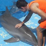 the dolphin and his trainer