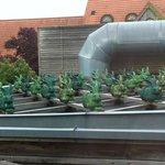 Arty roof decor!