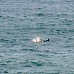 Dolphins from the campsite