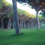 Golf Platja De Pals Photo